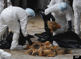 Health workers slaughter chickens at a wholesale poultry market in Hong Kong Wednesday, Dec. 21, 2011. Hong Kong health authorities are slaughtering more than 17,000 chickens at a market after a chicken carcass there was found to be infected with bird flu. (AP Photo/Kin Cheung)