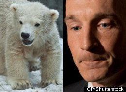A Tory MP has used the findings of U.S. climate skeptics to conclude the global polar bear population is flourishing. (CP/Shutterstock)