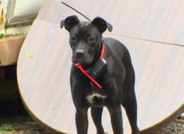 Bill Flowers' dog Liberty brought back a catch her owner didn't know how to handle.