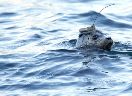 Seals with GPS attached to their heads were among the best animal stories that B.C. witnessed in 2013.