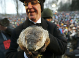 La marmotte Punxsutawney Phil, lors du jour de la marmotte 2013, à Punxsutawney (AP Photo/Keith Srakocic)