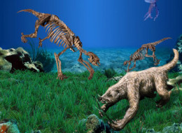 Skeletons and restoration of Thalassocnus, the marine sloth.