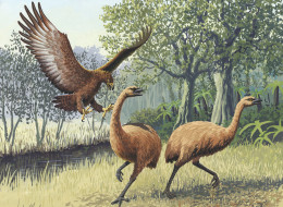 Artist's rendition of a Haast's Eagle attacking moas.
