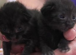 A San Diego cable company employee expecting a shipment of fiberglass equipment got a shock when he discovered two newborn kittens clinging to life inside the box.