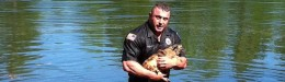 Image for Police Officer Dives Into Lake To Rescue Dog From Submerged Truck