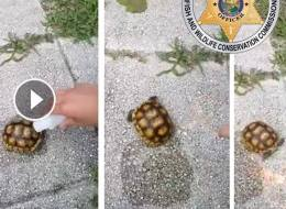 Images from an video of a Florida gopher tortoise being set on fire and killed.