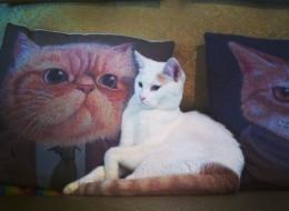 Catfe/Facebook