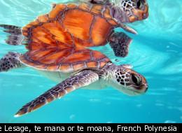 © Pierre Lesage, te mana or te moana, French Polynesia