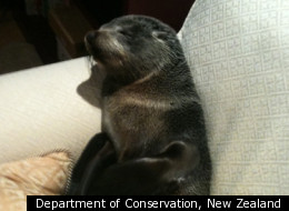 Department of Conservation, New Zealand