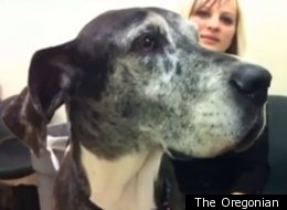 Three Great Danes and one blue pit bull were ordered to appear this week in the animal neglect trial of their owners, Wayne Martin and Layne Woods. The Portland residents are accused of failing to give two of the dogs adequate veterinary care.