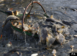 EU Fishing Quotas Have Angered Britain For Several Years