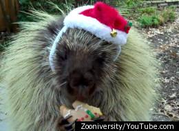 Zooniversity/YouTube.com