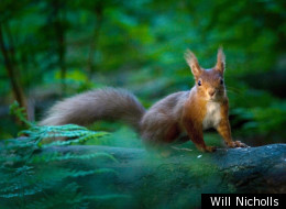The winning photo in the 2011 RSPCA Young Photographer Awards