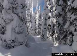 Whitefish Mountain Resort in Montana is known for its tree skiing.