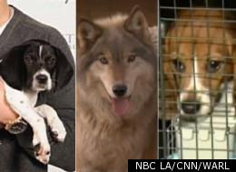 NBC LA/CNN/WARL