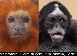 Flickr: mcamcamca, Flickr: su neko, Mila Zinkova, Getty