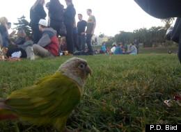 Patricia Dolores surveys the scene at San Francisco's Dolores Park