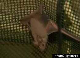 Abandoned Israeli army bunkers along the Jordan River are providing a lifeline for bats on the endangered species list.