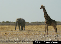 Etosha National Park, Namibia, where scientists discovered what they believe are fossils of the first animals.