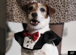Uggie of