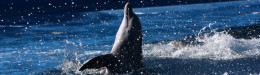 Image for Δεύτερο μωρό δελφίνι σκοτώθηκε από λουόμενους που ήθελαν να βγάλουν selfie στην Αργεντινή