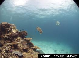 Catlin Seaview Survey Take Google Earth Under The Sea
