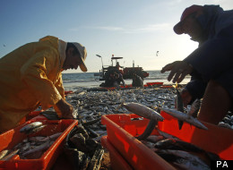 MPs have called for fishing regulation to be reformed.