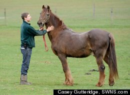 Shayne, a thoroughbred, is being hailed the world's oldest horse at the age of 51. The liver chestnut Irish Draught cross has spent a lifetime in a private stables and has only been ridden occasionally.