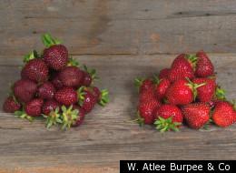 W. Atlee Burpee & Co