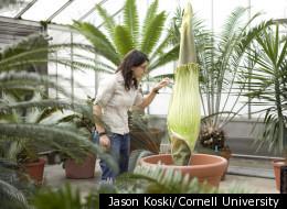Jason Koski/Cornell University
