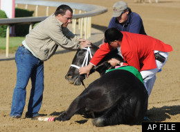 May 3, 2008: Track personnel try to hold down Eight Belles after the 134th Kentucky Derby at Churchill Downs in Louisville, Ky. Eight Belles was euthanized after breaking both front ankles following a second-place finish in the Kentucky Derby.