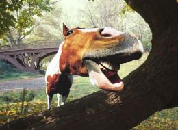 Weird Horse with a pig