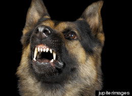 Officials in Kfar Saba, Israel, have a bone to pick with an an unruly suspect who bit the German Shepard sent into a cell to subdue him.