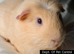 These Adorable Pets All Need Homes