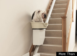 A dog sits on a chair lift as he slides up the stairs.