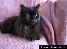 Flickr: Annie Mole