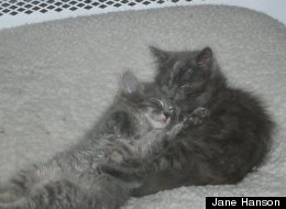 These cuddly kittens might be tax deductible--if you have enough of them. In 2004, an owner of 70 cats tried to write off $12,068 in pet-related expenses. Though the IRS initially refused her claims, she sued and was able to get most of the expenses deducted.