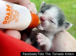 Facebook/Toto The Tornado Kitten