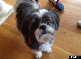 A West Hartford police officer performed a modified version of the Heimlich maneuver on Harry, a Shih Tzu, who was choking on a treat.