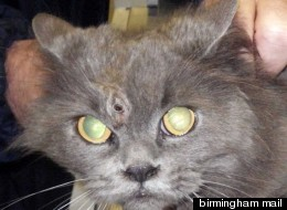 Gabrielle has been labelled the miracle Brummie cat