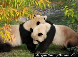 Mehgan Murphy/National Zoo