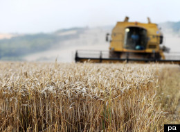 The anti-GM activists who are threatening to destroy experiment on genetically modified crops said they feel they have
