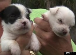Two of more than 250 dogs seized from a Florida home last week.