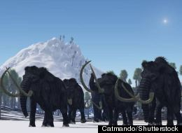 Scientists say the dwarf mammoths were not woolly, like the ones in this illustration.
