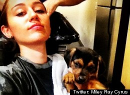 Twitter: Miley Ray Cyrus