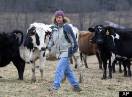 In this Feb. 2, 2012 file photo, organic dairy farmer Siobhan Griffin stands in a field with her cows a field at Raindance Farm in Westville, N.Y. While other states are reaping the wealth of the Marcellus Shale, New York has had a moratorium on drilling for four years while it overhauls regulations amid intense lobbying for a ban. Griffin, who raises grass-fed cows and sells organic cheese, doesn't see gas as the answer. (AP Photo/Mike Groll, File)
