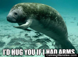 There look it this peaceful manatee. Don't you feel better?