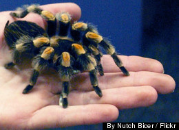 A family trip to the Victoria Bug Zoo is a great way to make a new, leggy little friend.