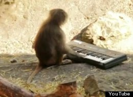 A monkey playing a synth