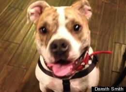 Chumley, an English Bulldog mix, went missing from his Colorado home in February only to turn up in Kansas four months later.
